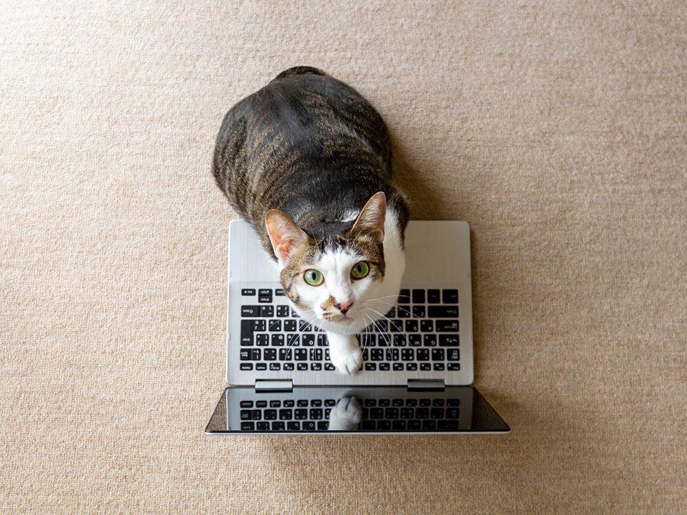 ce chat aux yeux verts fait du télétravail!