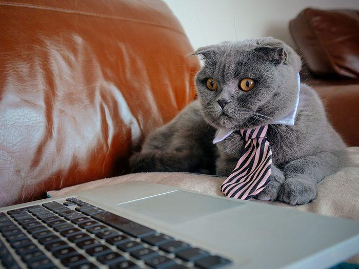 Ce chat en télétravail a même pensé à mettre sa tenue!