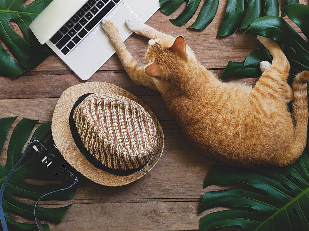 Ce chat roux en télétravail parmi les feuilles de palmier.