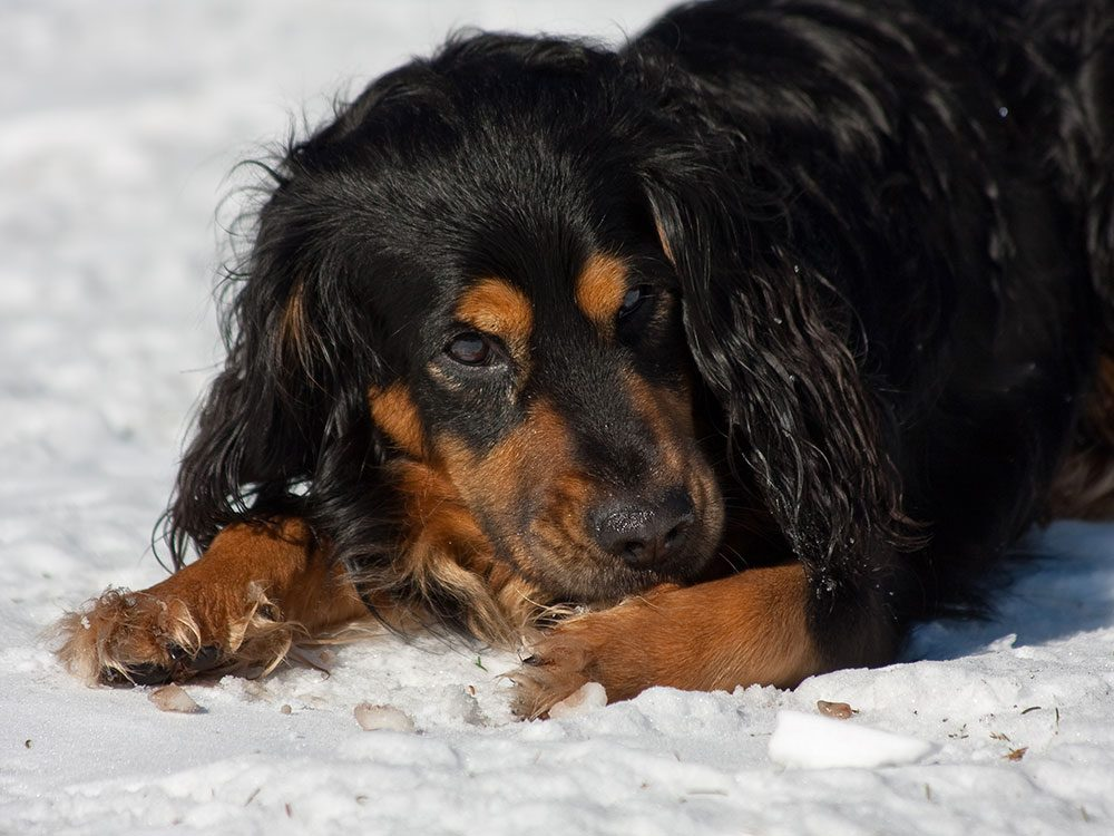 Des problèmes de comportement peuvent expliquer pourquoi votre chien se lèche les pattes.