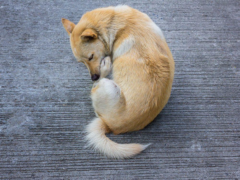La présence de parasites peut expliquer pourquoi votre chien se lèche les pattes.