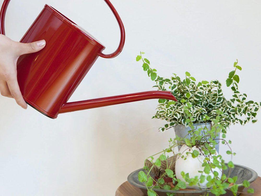 Arroser les plantes pour entretenir la maison.