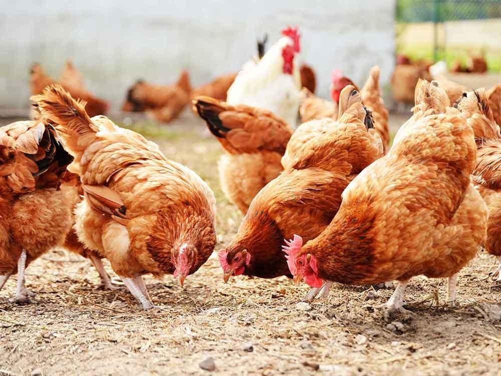 Vous imaginez des animaux gambader dans les champs lorsque vous lisez l'étiquette des aliments.