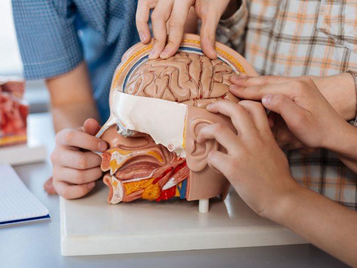 Où la mémoire à court terme est-elle située dans le cerveau?