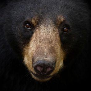 Mieux vaut ne pas faire d'erreur face à un ours noir.