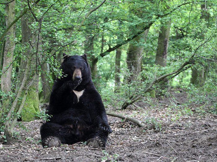 Les premiers échanges avec Bosco, l'ours noir.