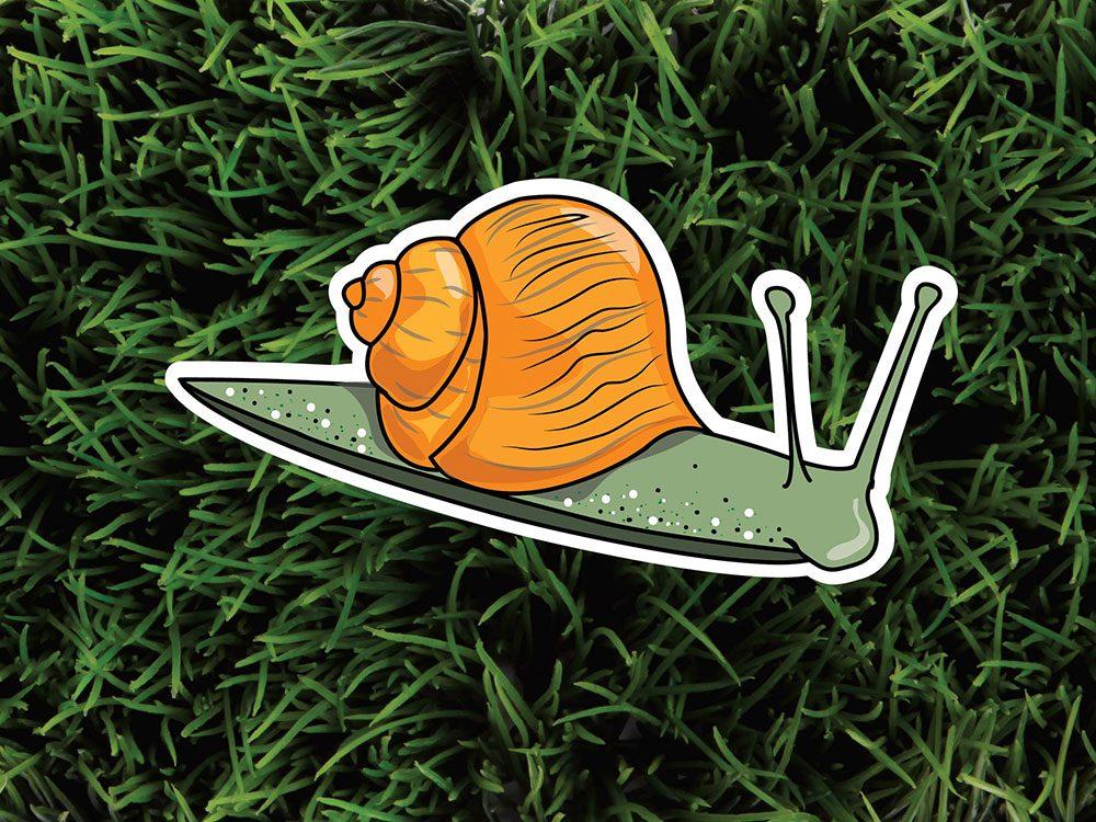 Les escargots font partie des parasites de jardin.