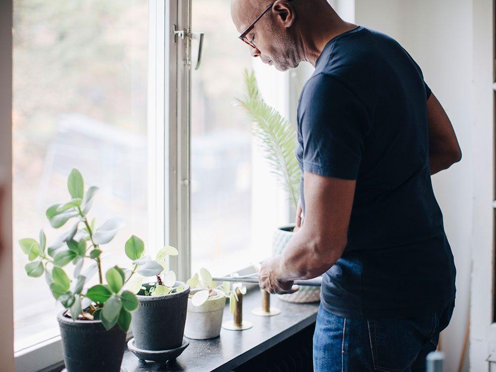 Arroser les plantes d'intérieur avec parcimonie pour éviter la pollution intérieure.