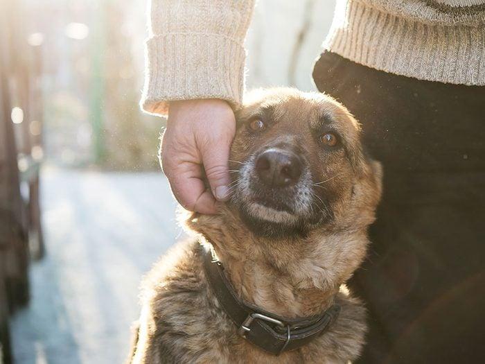 Rooney le chien recueilli par Nicole était finalement plus âgé.