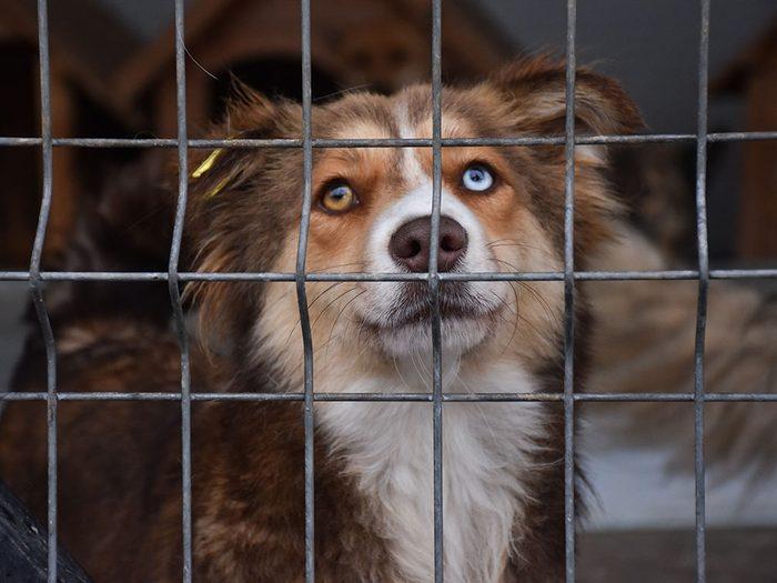 Il y a des millions de chiens abandonnés.