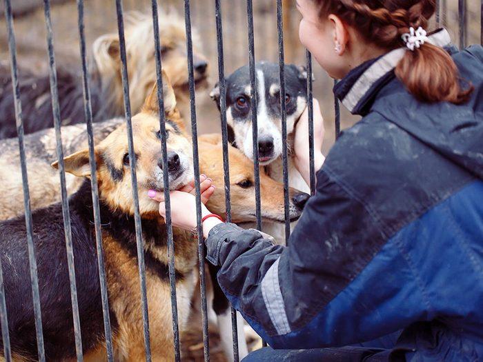 Une nouvelle vie au Canada pour ces chiens.