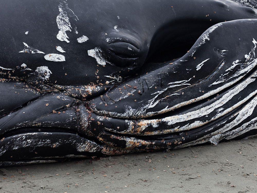 La nécropsie des mammifères marins n'est qu'une partie de l'enquête.