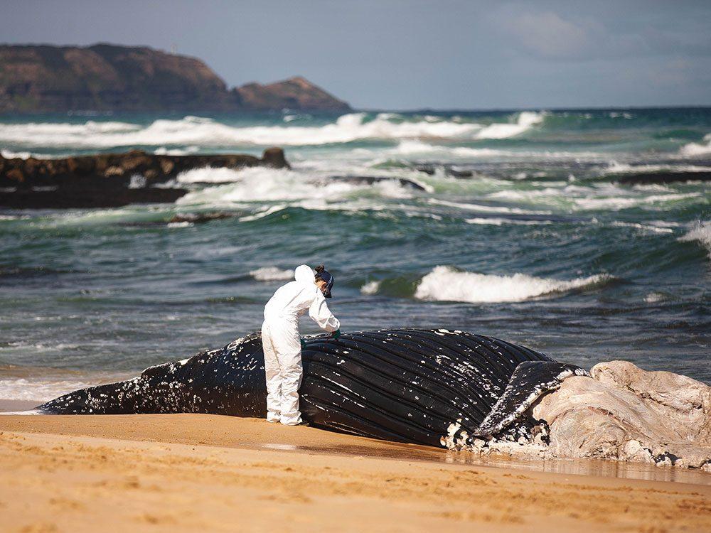 Médecin légiste pour mammifères marins est un profession peu commune.