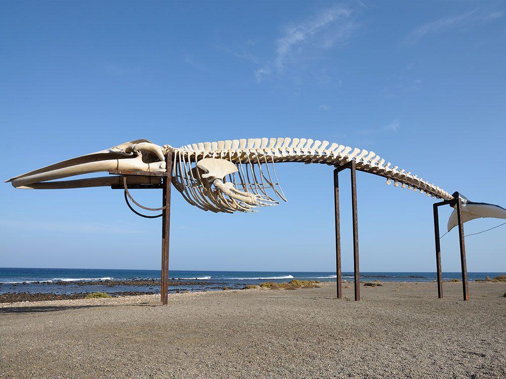 L'histoire des mammifères marins ne s'arrête pas à leur mort.