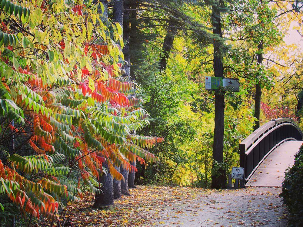 L'automne au Québec et au Canada dans un parc au Manitoba.
