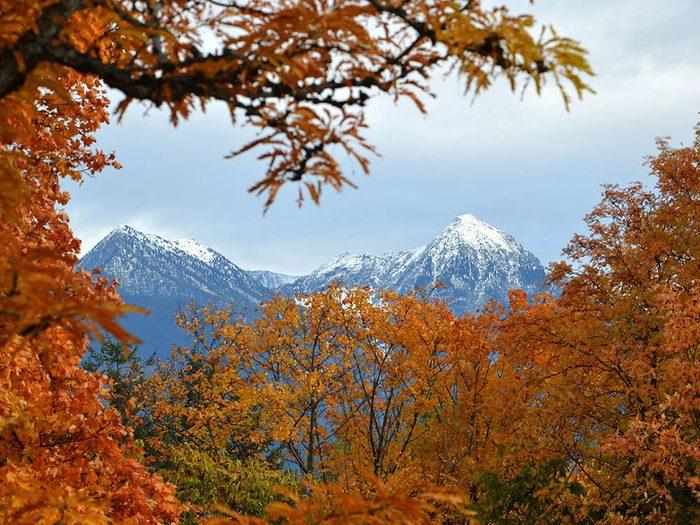 Des sommets enneigés encadrés par l'automne au Québec et au Canada.