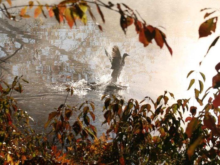 Un oiseau lors d'un automne au Québec et au Canada.