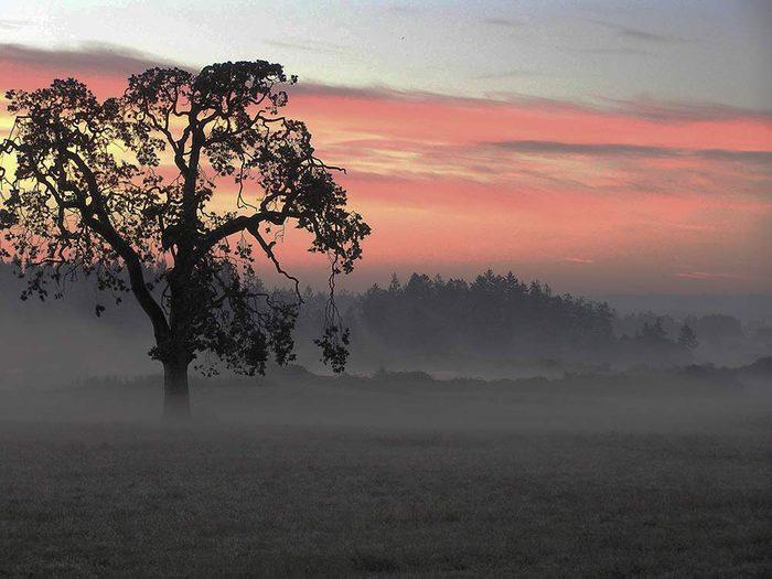 L'automne au Québec et le brouillard matinal.