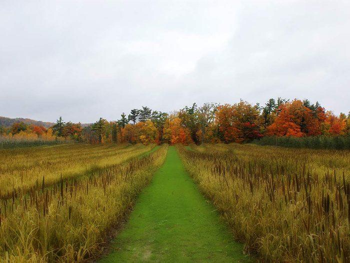 L'automne au Québec et au Canada à ciel couvert.