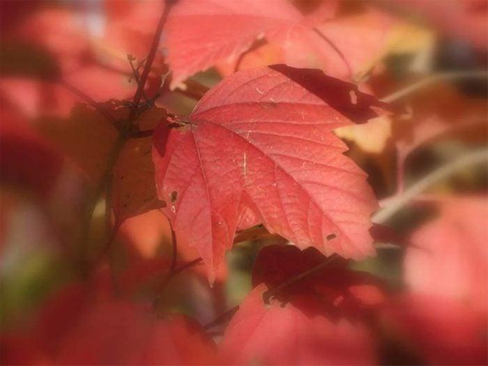 L'automne au Québec et au Canada tout droit sorti d'un rêve.