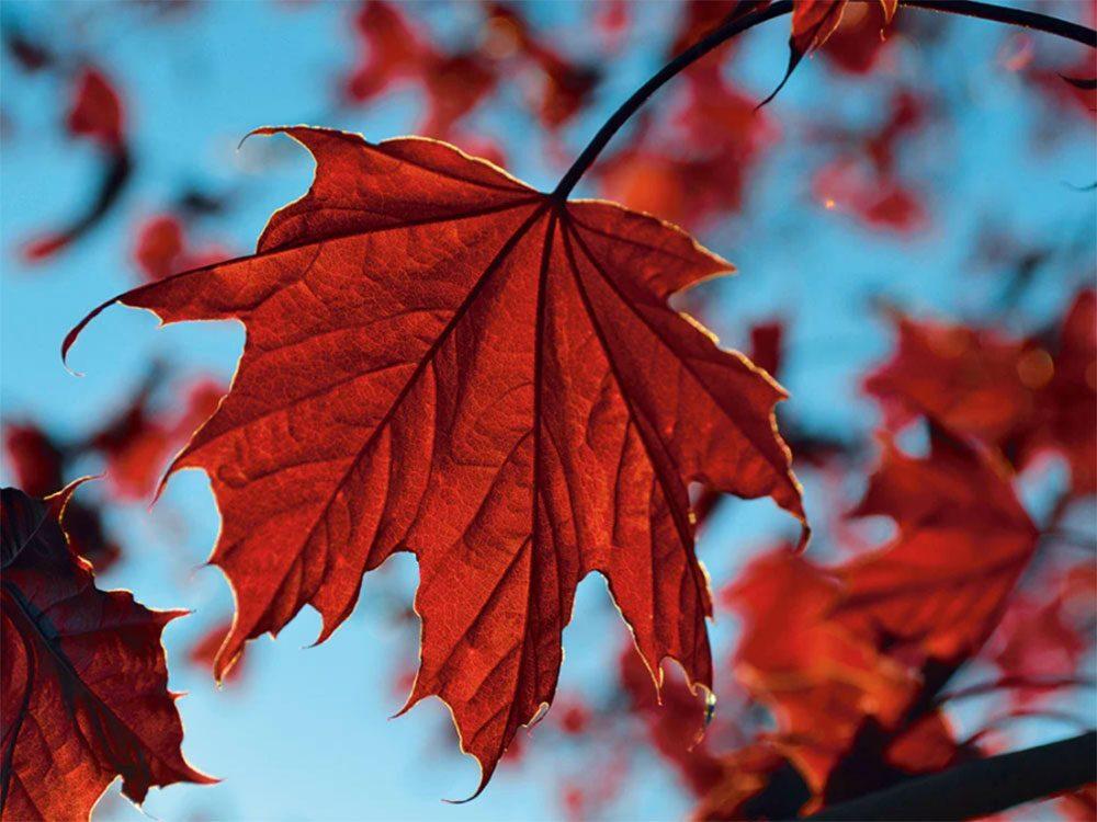 Une photo emblématique de l'automne au Québec et au Canada.
