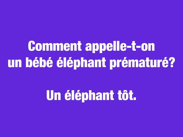 Blagues courtes: l'éléphant tôt.