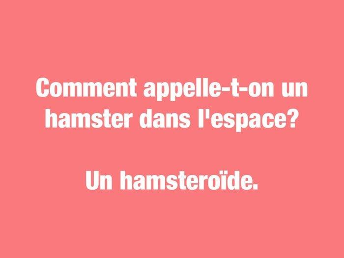 Blagues courtes: l'hamsteroïde.