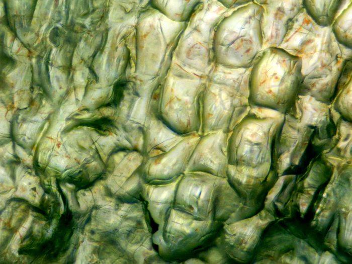 Des carottes en image au microscope.