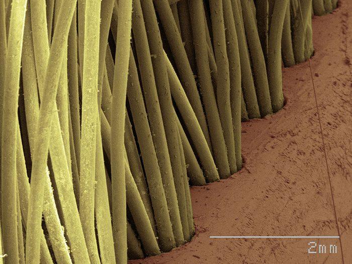 Des poils de brosse à dents en image au microscope.