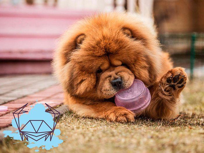 Signe astrologique: la meilleure race de chien pour les Cancers.