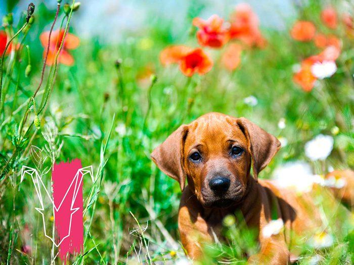 Signe astrologique: la meilleure race de chien pour les Capricornes.