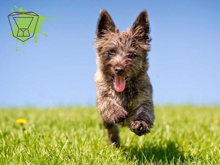 Signe astrologique: la meilleure race de chien pour les Lions.