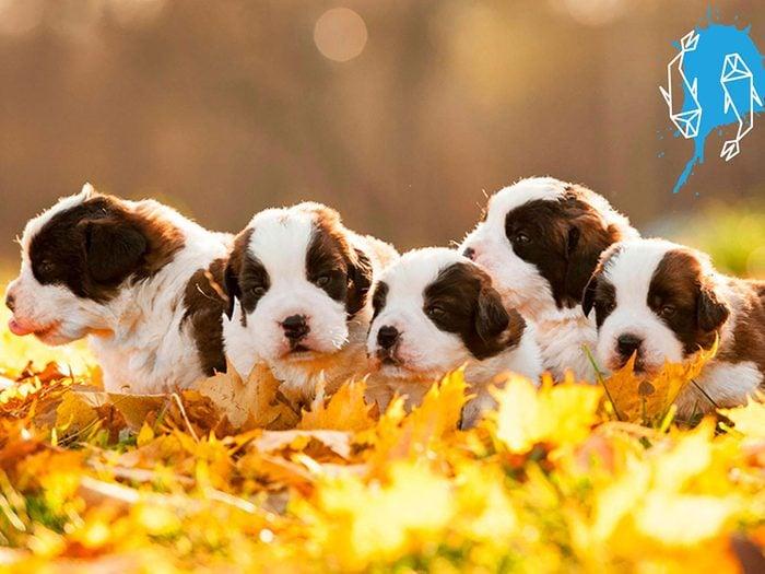 Signe astrologique: la meilleure race de chien pour les Poissons.