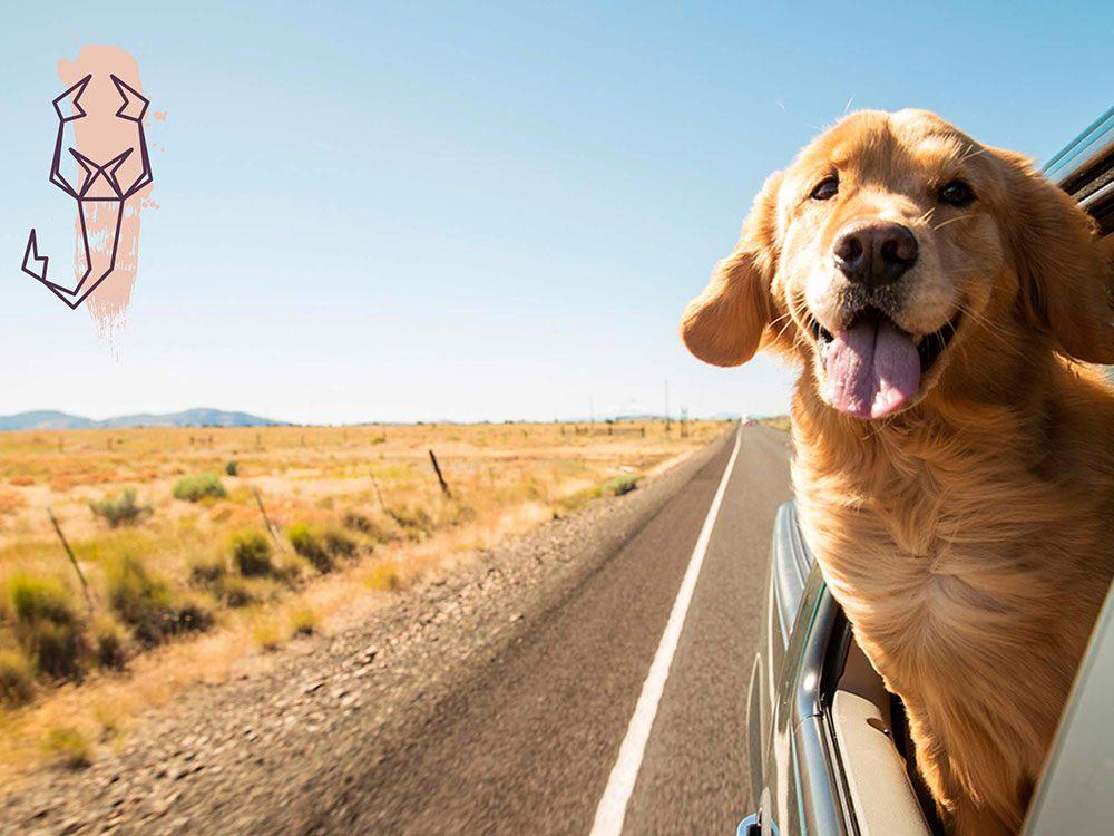 Signe astrologique: la meilleure race de chien pour les Scorpions.