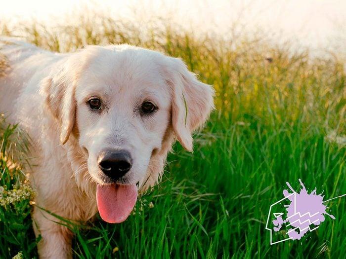 Signe astrologique: la meilleure race de chien pour les Verseaux.