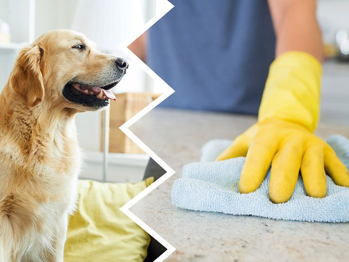 Le nettoyant pour le comptoir fait partie des produits nettoyants toxiques pour le chien.