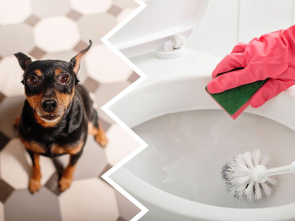 Les nettoyants pour cuvettes de toilette font partie des produits nettoyants toxiques pour le chien.