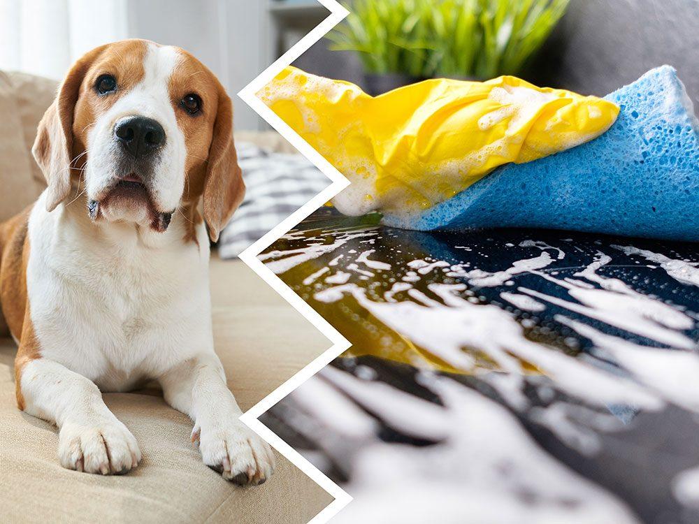 L'ammoniaque fait partie des produits nettoyants toxiques pour le chien.