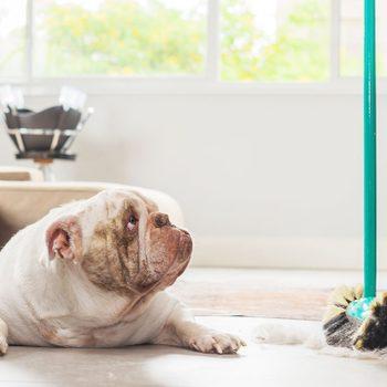 Faites attention à ces produits nettoyants toxiques pour le chien.