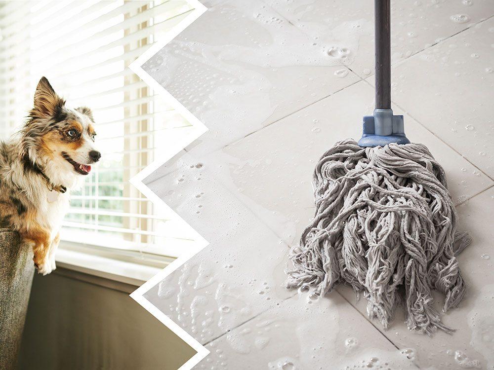 L'eau de Javel fait partie des produits nettoyants toxiques pour le chien.