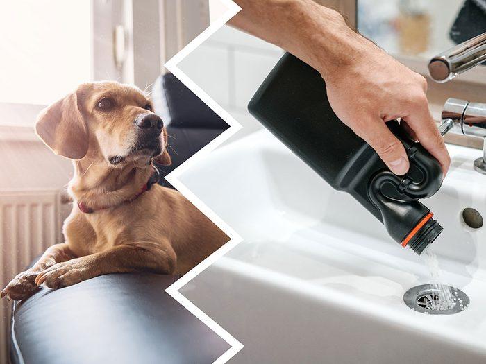 Le nettoyant pour le drain fait partie des produits nettoyants toxiques pour le chien.