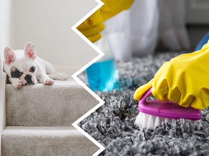 Les nettoyants pour tapis font partie des produits nettoyants toxiques pour le chien.