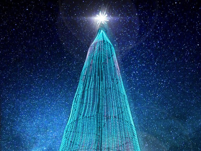 L'arbre Illumi est majestueux.