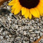 Les bienfaits des graines de tournesol sur la santé