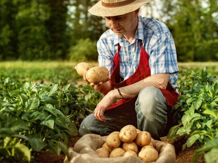 Mythe: l'heure d'été aide les agriculteurs.