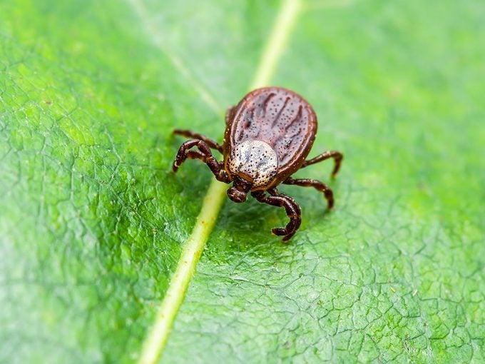 La maladie de Lyme se trouve même sous les feuilles mortes.