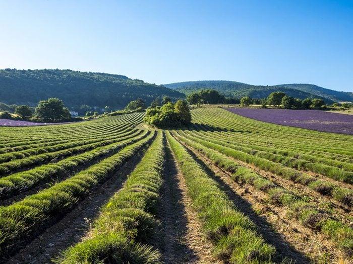 Des observations d'ovnis ont eu lieu en France en 1981.