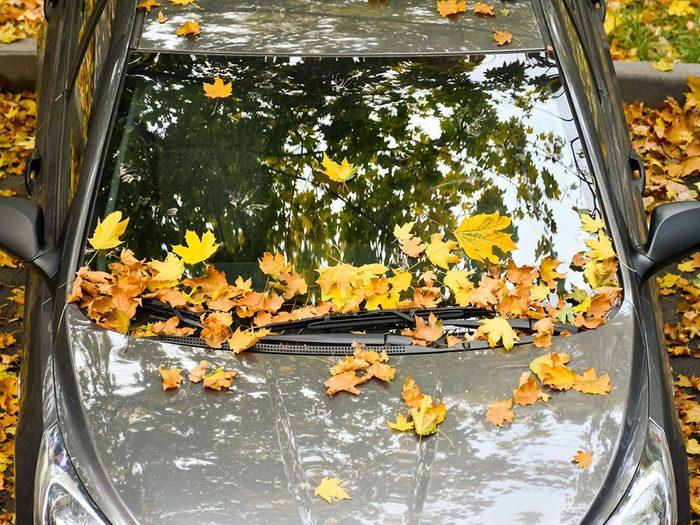 Entretien de l'auto: les feuilles peuvent abîmer votre voiture.