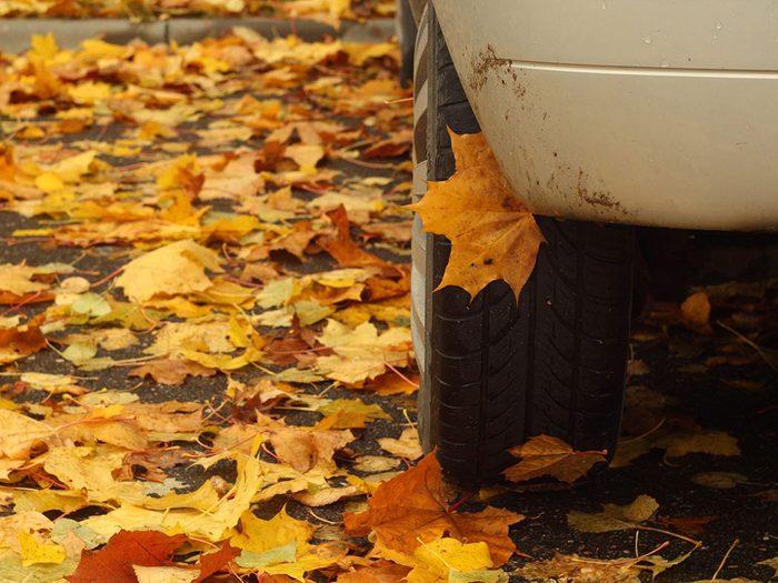 Entretien de l'auto: la sève des arbres peut abîmer votre voiture.