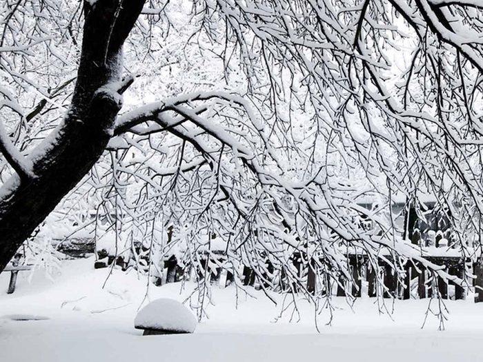 Retirer glace et neige facilement autour des arbres et des buissons.